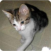Adopt A Pet :: Blake - Davis, CA