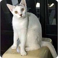 Adopt A Pet :: Cindy - New Port Richey, FL