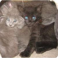 Adopt A Pet :: Posh - Dallas, TX