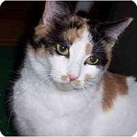 Adopt A Pet :: Leah - Jenkintown, PA