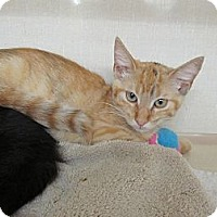 Adopt A Pet :: Dabs - Riverhead, NY