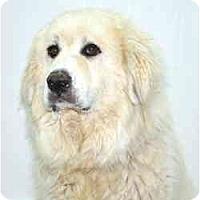 Adopt A Pet :: Alaska - Port Washington, NY