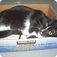 Adopt A Pet :: Little Honey - Alamo, CA