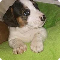 Adopt A Pet :: Solei - Marlton, NJ