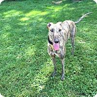 Adopt A Pet :: Buttercup - Swanzey, NH