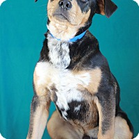 Adopt A Pet :: Sam - Waldorf, MD