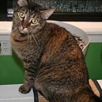 Adopt A Pet :: Motta - Marietta, GA