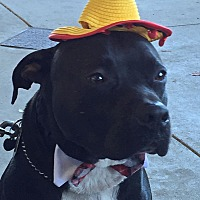 Adopt A Pet :: A - BUGSY - Boston, MA