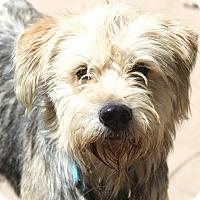 Adopt A Pet :: Remington - Woonsocket, RI