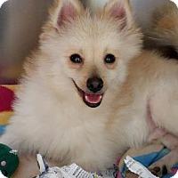 Adopt A Pet :: S/C Teddy - Miami, FL