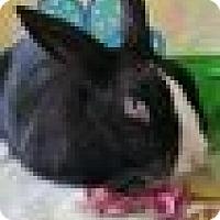 Adopt A Pet :: George - Paramount, CA