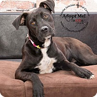 Adopt A Pet :: Miya - Apache Junction, AZ