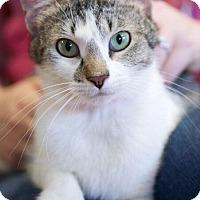 Adopt A Pet :: Ariel - Chattanooga, TN