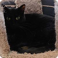 Adopt A Pet :: Shadow - San Angelo, TX