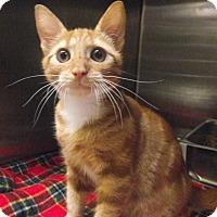 Adopt A Pet :: Viper - Chambersburg, PA