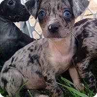 Adopt A Pet :: Jenna - Joliet, IL