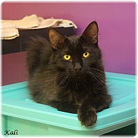 Adopt A Pet :: Kali - Welland, ON