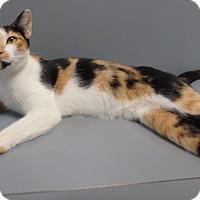 Adopt A Pet :: Tomomi - Seguin, TX