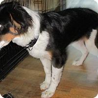 Adopt A Pet :: Alfie - Coventry, CT