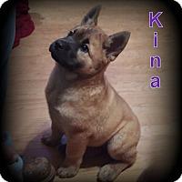 Adopt A Pet :: Kina - Denver, NC