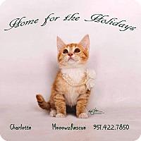 Adopt A Pet :: Charlotte  Hannah - Riverside, CA