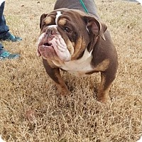 Adopt A Pet :: Mercedes - St John, IN