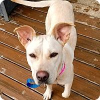 Adopt A Pet :: Bea - New Kensington, PA