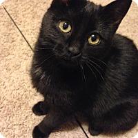 Adopt A Pet :: Cosmo - Eagan, MN