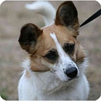 Adopt A Pet :: Ellen-ADOPTED! - kennebunkport, ME