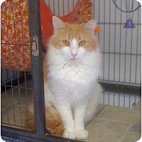 Adopt A Pet :: Goldenflower - Monroe, GA