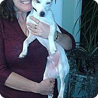 Adopt A Pet :: Odie - Hamilton, ON