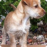 Adopt A Pet :: Rasberri - Gilbert, AZ