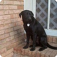 Adopt A Pet :: Shelly - Tunbridge, VT