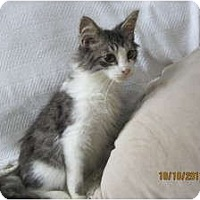 Adopt A Pet :: Sebastian - Sterling Hgts, MI