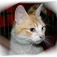 Adopt A Pet :: Annissa - Montgomery, IL