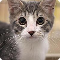Adopt A Pet :: Ricky - Sacramento, CA