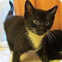 Adopt A Pet :: HAZEL - Acme, PA