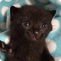 Adopt A Pet :: Gumdrop - Union, KY