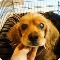 Adopt A Pet :: Red - Alpharetta, GA