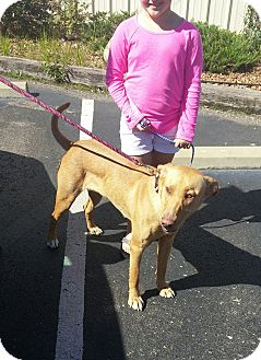 Labrador Retriever/Retriever (Unknown Type) Mix Dog for adoption in Glastonbury, Connecticut - Rosie