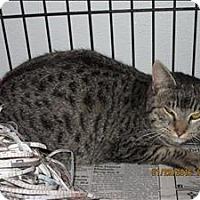 Adopt A Pet :: 16-01-0262b - Dallas, GA