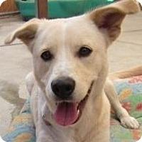 Adopt A Pet :: Clara - Canoga Park, CA