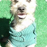 Adopt A Pet :: Naya - San Diego, CA
