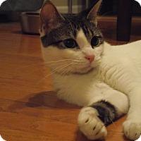Adopt A Pet :: Hazel - Manhattan, KS