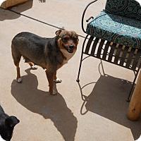 Adopt A Pet :: Tessa - dewey, AZ