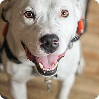 Adopt A Pet :: Duke Ellington - Jersey City, NJ