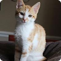 Adopt A Pet :: Butterscotch - Huntsville, AL