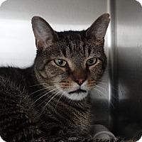 Adopt A Pet :: George Washington - Elyria, OH