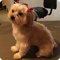 Adopt A Pet :: Maxie - Fresno, CA