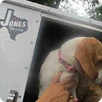 Adopt A Pet :: LIZ - Conroe, TX